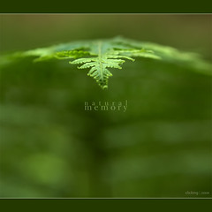 Natural memory - [ EXPLORED ] (-clicking-) Tags: lighting green nature beautiful leaves square leaf focus dof natural explore colorphotoaward allxpressus spiritofphotography 100commentgroup flickraward bestcapturesaoi luxtop100 elitegalleryaoi