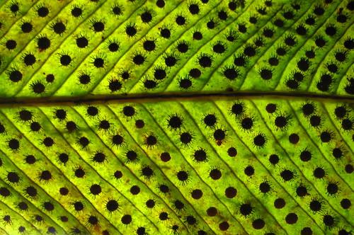 abstract closeups esporos leaves nature texturas green