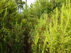 La végétation de la 'piste' du ruisseau de Mela