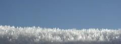 gelo (Pioppo_) Tags: ice gelo frozen freddo ghiaccio flickraward