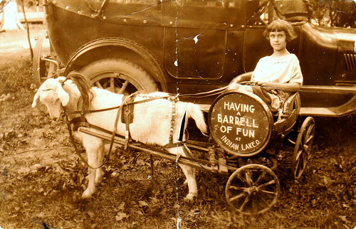 Peach in goat cart