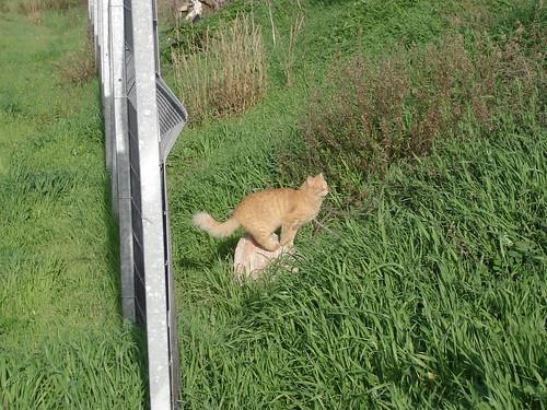 Orange cat 2