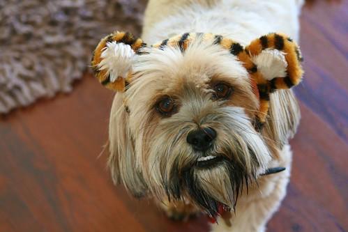 Doggy-cheetah