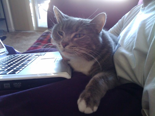 My cat Winston converses with his internet friends.