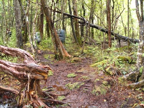 Stewart Island Trek