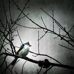 memory lane (olcore) Tags: bird texture nature square missouri graphicmaster newgoldenseal olcore