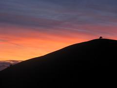 bison morning (James Kyung Photography) Tags: california catalinaisland bison