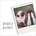 puglypixel_polaroid_125x125