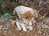 Cachorros (Cyberian8) Tags: animal morocco marrakech animaux diere marruecos marroc 動物 tier 동물 djur 动物 hayvan desanimaux животных hewan haiwan الحيوان životinja สัตว์ पशु