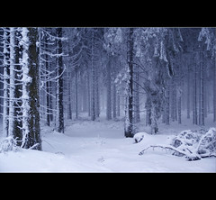 forest in winter (motivsucher) Tags: wood schnee winter snow cold forest hoarfrost kalt wald raureif sauerland niedersfeld clemensberg impressedbeauty vanagram yourwonderland