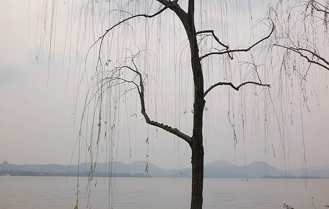 西湖樹01