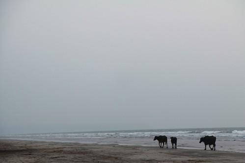 Murud Dapoli Karde Beach