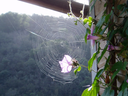 spider web at the barn