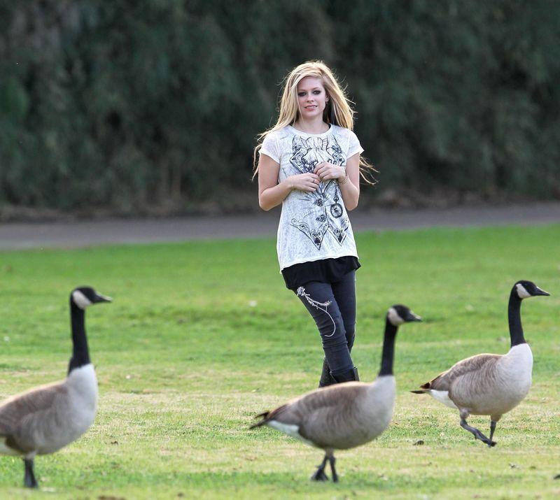 Avril Lavigne Alice gansos