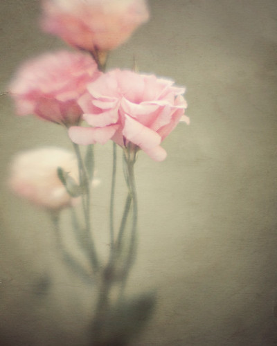 Do you dream of flowers? / Irene Suchocki