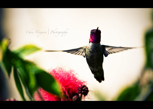 Flight - Canon 7D