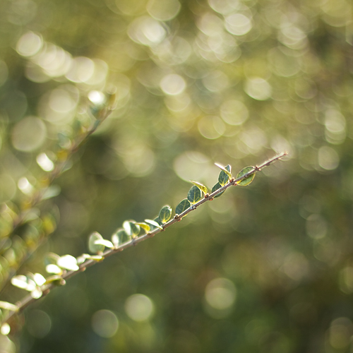 greenish bokeh.