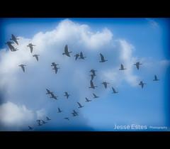 Focus On Youth (Jesse Estes) Tags: oregon portland flying geese jesseestesphotography focusonyouth