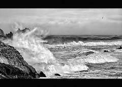 Te quiero, hasta cuando te pones así (Leonorgb) Tags: costa canon mar leo olas gaviota temporal rocas cantabria cantabrico liencres arnia blackwhitephotos