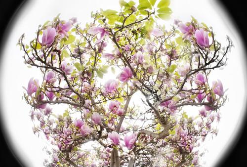 Magnolia World