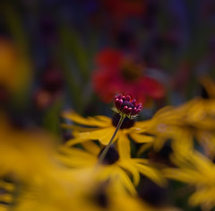 Welcome 1 (JFess4) Tags: nature floral flickr posted