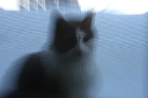 cat 006-1