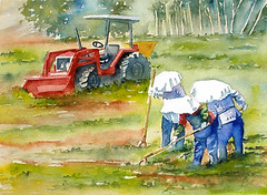 Original Painting - Three Gardeners and a Tractor (6catsart) Tags: tractor art nature field watercolor painting landscape farm originalpainting burnaby watercolour farmer westcoast gardener marketgarden landscapepainting natureart landscapeart farmart figurativeart watercolourpainting originalwatercolor canadianartist fraserriverdelta pacificwestcoast southburnaby 6catsart corinneaelbers