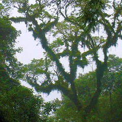 RIMG6088x400 (Weltbummler) Tags: yerbabuena tucumn parquesanyavier
