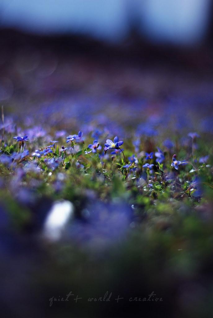 itty flowers
