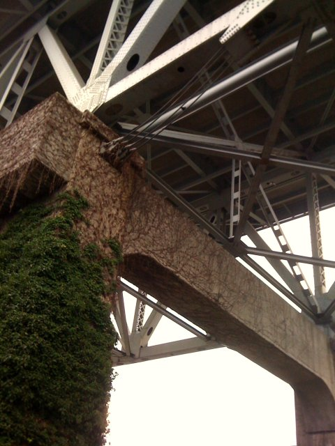 crossbeams and ivy