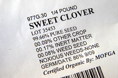 clover seed 006