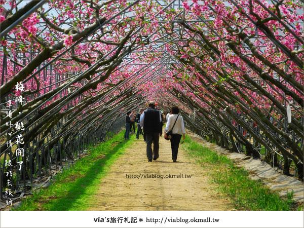 【梅峰農場桃花緣】最美的桃花隧道,就在南投梅峰這裡~(上)18