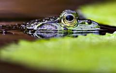 Toad (MECAB) Tags: rio riodejaneiro garden de botanical janeiro eu frog toad jardim botanico te sapo amo perereca rioeuteamo