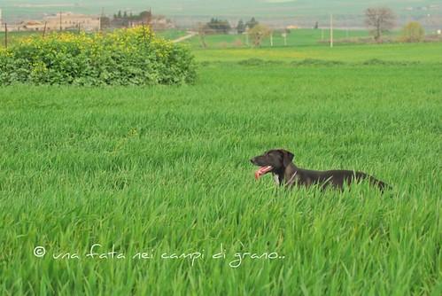 leonessa 2010 102