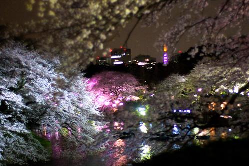 Sakura  Lightup with Tokyo Tower