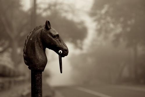 The Horse Head