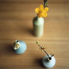 top* (miki**) Tags: flower 120 angle little top vases rolleiflex35f rolleinar2