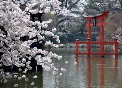 Japanese Garden (Trish Mayo) Tags: newyork brooklyn japanesegarden spring cherryblossoms gothamist brooklynbotanicgarden torii hanami toriigate bej thebestofday gnneniyisi