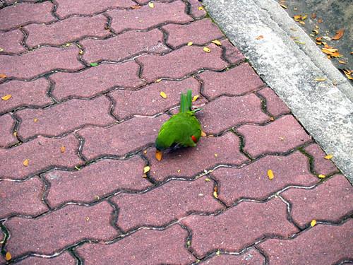 Parakeet I