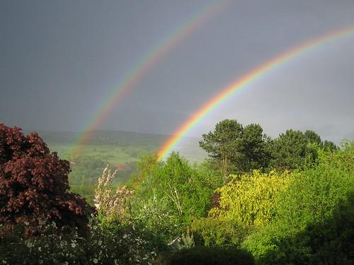 utley rainbows