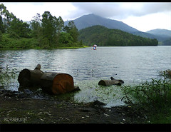save tree... save life... (RC Sreejith | ) Tags: nature river savetrees saveearth kundaladam sreejithrc rcsreejith