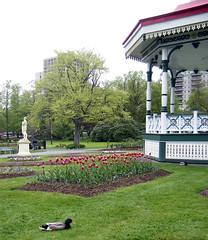 Bandstand, Halifax Public Gardens