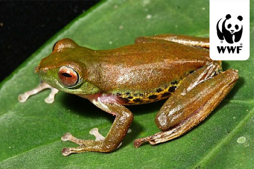 Pictures Of Frogs To Colour. A colour-changing flying frog