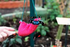 baudchon-baluchon-mindo-papillons-5