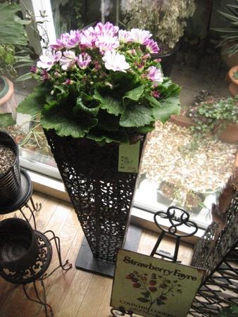 井口の花屋 シャノアール 11
