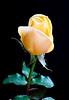 Pastís de roses i menta