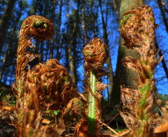 youve let us down son (JimWicks) Tags: wood woodland ferns lx3