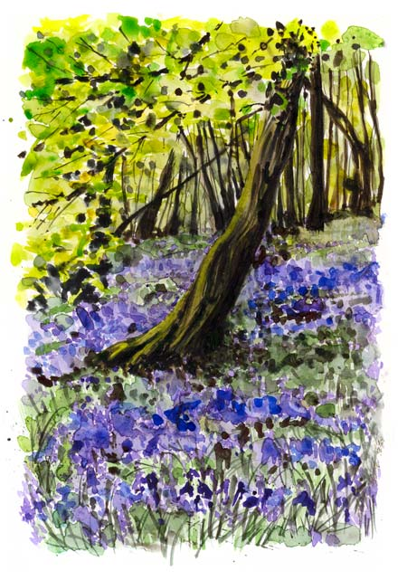 heartwood_bluebells