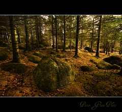 Find your way (Ptur Gunn Photograpphy) Tags: wood trees brown tree green love beautiful grass yellow rock socks stone mos way geotagged lost photo iceland moss woods flickr stones sony magic great wide like sigma super your gras perlan mm alpha 700 1020 find sland petur gunn skjuhl ptur gunnarsson skgur a700 mr magicl