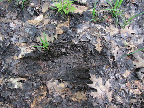 big foot footprint?